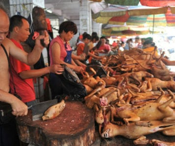 eating dogs in China