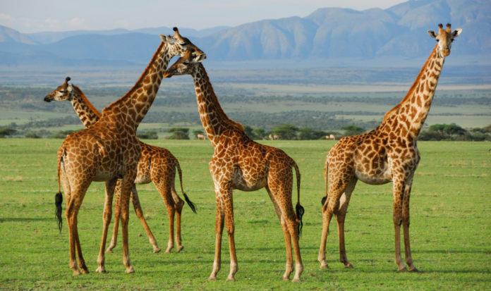Tanzania wildlife tourism
