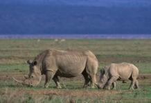 Ngorongoro Conservation