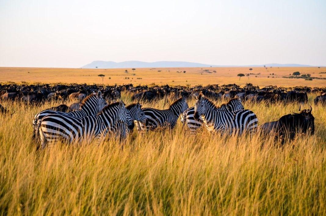 Tanzania embarks on major crackdown on bogus tour operators
