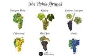 wine, Kevin Begos: Wine links past to present, Buzz travel | eTurboNews |Travel News