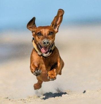 pet-friendly beach