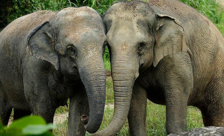 elephant, World Elephant Day: Choosing responsible animal experience venues abroad, Buzz travel | eTurboNews |Travel News