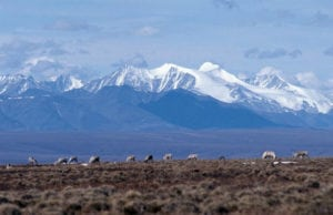 , Two major earthquakes in Alaska's Arctic National Wildlife Refuge, Buzz travel | eTurboNews |Travel News