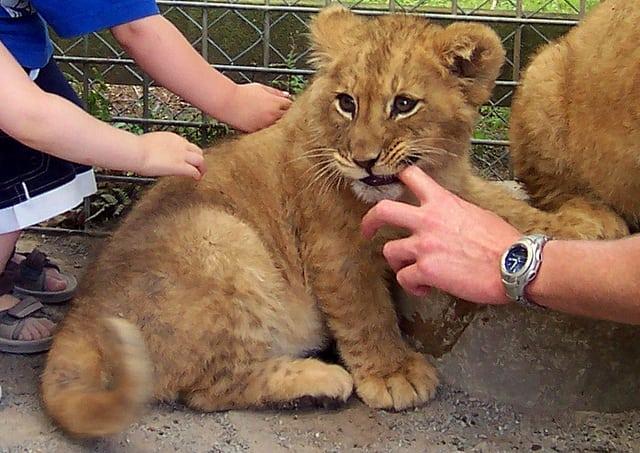 lion tourist attractions