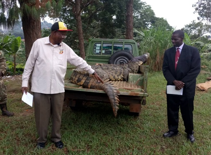Tourism officials size up capture of man-eating crocodile at Lake Victoria