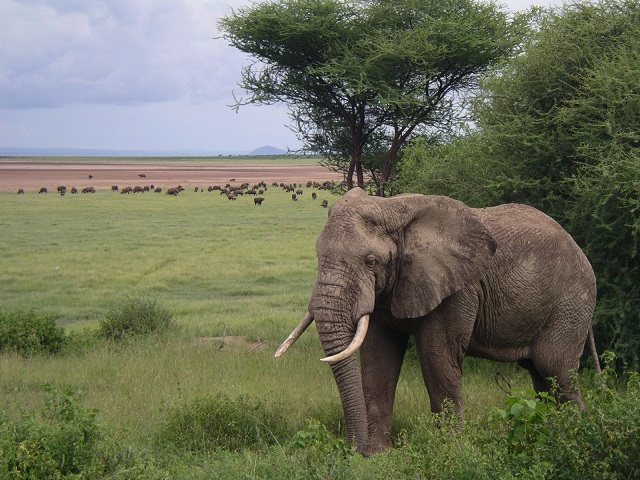 Africa to get $25 million support for wildlife protection