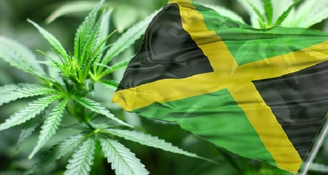 Ganja and medicinal herbs: New path to wellness for Caribbean Tourism?