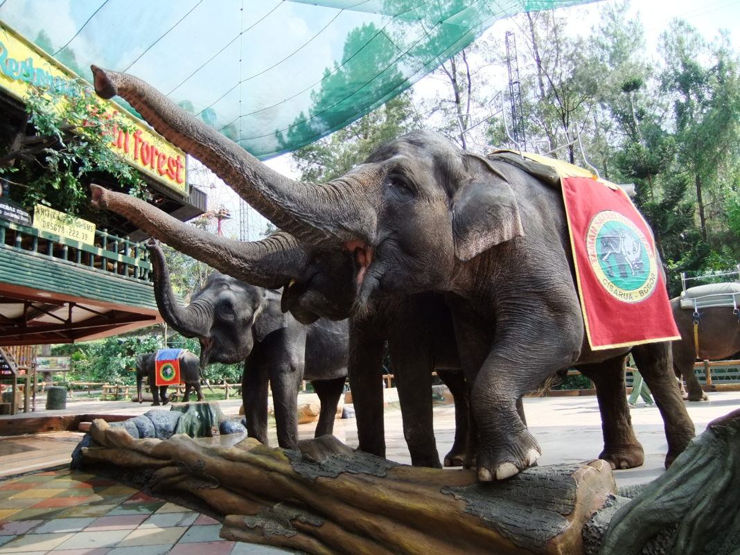False: No abuse of elephants in Indonesia?