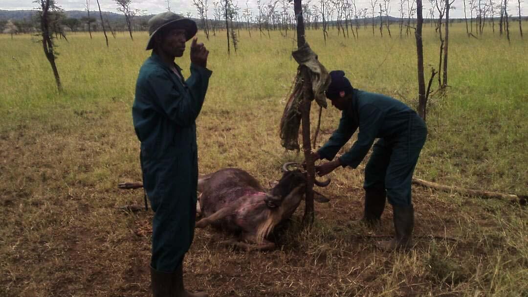 Tanzania tour operators contribute $211,000 to save wildlife