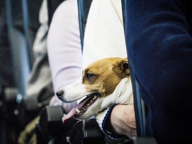 Αποτέλεσμα εικόνας για Travelers have mixed views about pets on planes