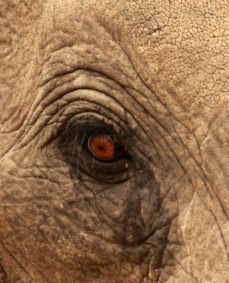 Young Balule Elephant shot  13 times before horrified visitors