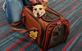 luggage, Drop your luggage, Buzz travel | eTurboNews |Travel News