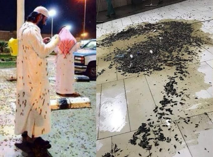 They're everywhere – enormous swarm of locusts descends on Mecca