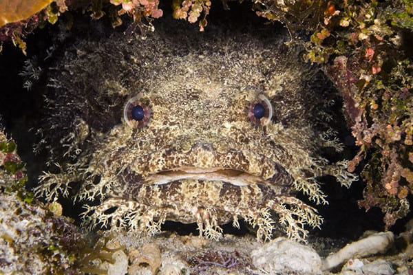 , A toadfish attacked and injured two tourists at Whitsunday Islands in Queensland, Australia, Buzz travel | eTurboNews |Travel News