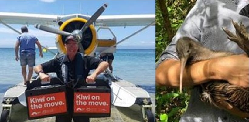 Unique travel: Couple helps kiwi birds fly