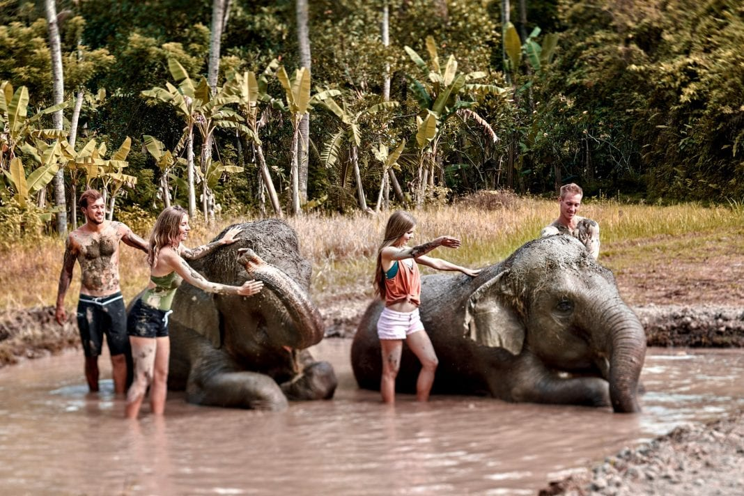 Elephant Mud Fun: Tourists can get down and dirty with friendly elephants at Bali Zoo