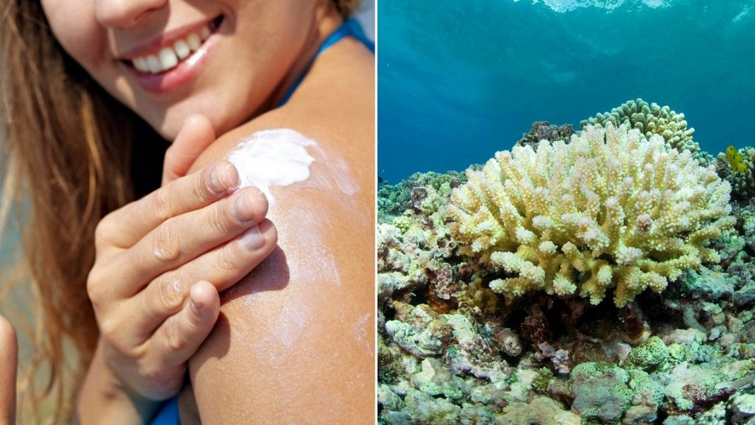 , Florida's Key West bans sunscreen products to protect coral, Buzz travel | eTurboNews |Travel News