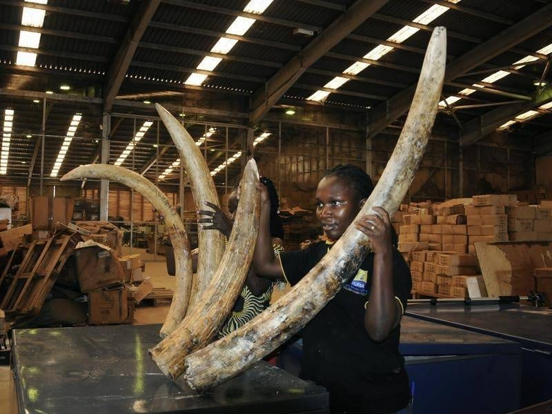 , Uganda officials bust major ivory and pangolin scales smuggling racket, Buzz travel | eTurboNews |Travel News
