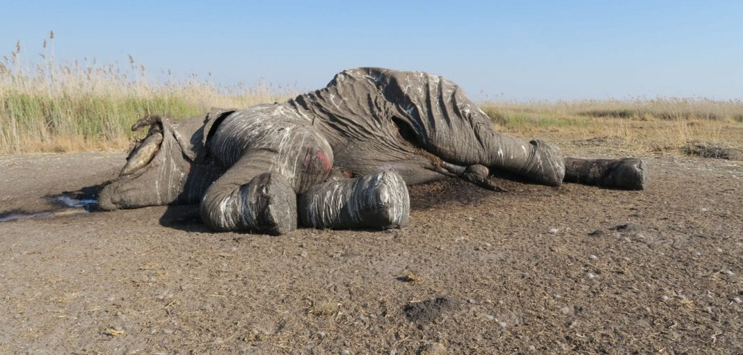 , Botswana proposes banning hunting and trade as elephant population declines, Buzz travel | eTurboNews |Travel News