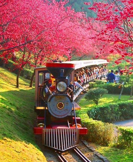 Taiwan Tourism shares best locations for Pink Cherry Blossom Season