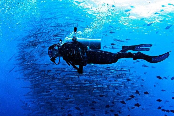 Solomon Islands dive operators to establish formal association