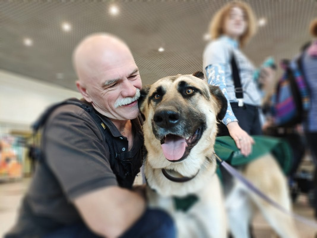 Airline passengers enjoy canine therapy sessions at Moscow Domodedovo Airport