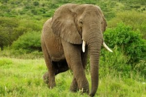 , African Game Rangers: Key conservation tourism partners in stress, Buzz travel | eTurboNews |Travel News