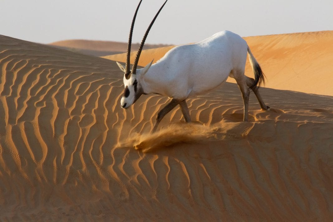 , How Emirates is supporting and preserving biodiversity, Buzz travel | eTurboNews |Travel News
