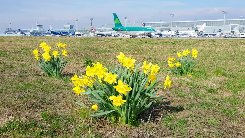 , Easter School Holidays ring in busy travel season at Frankfurt Airport, Buzz travel | eTurboNews |Travel News
