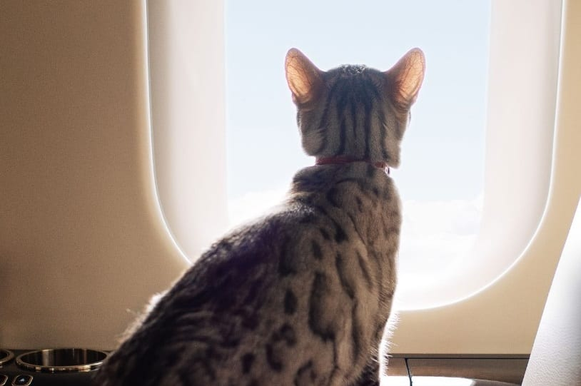 VistaJet sees animals flying up whopping 104 percent