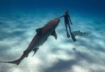 Shark and humans