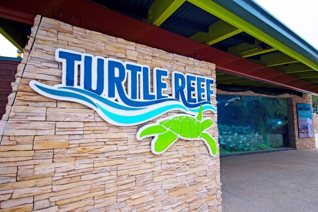 SeaWorld San Antonio opens state-of-the-art Turtle Reef habitat