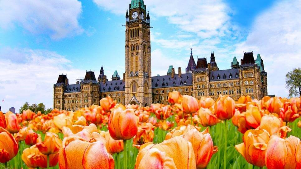 2019 Canadian Tulip Festival draws largest crowd in a decade