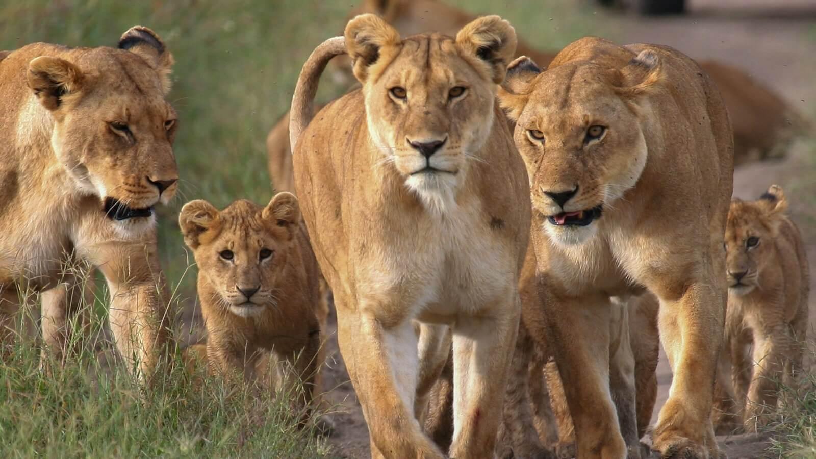 Tanzania's wildlife parks turn sixty