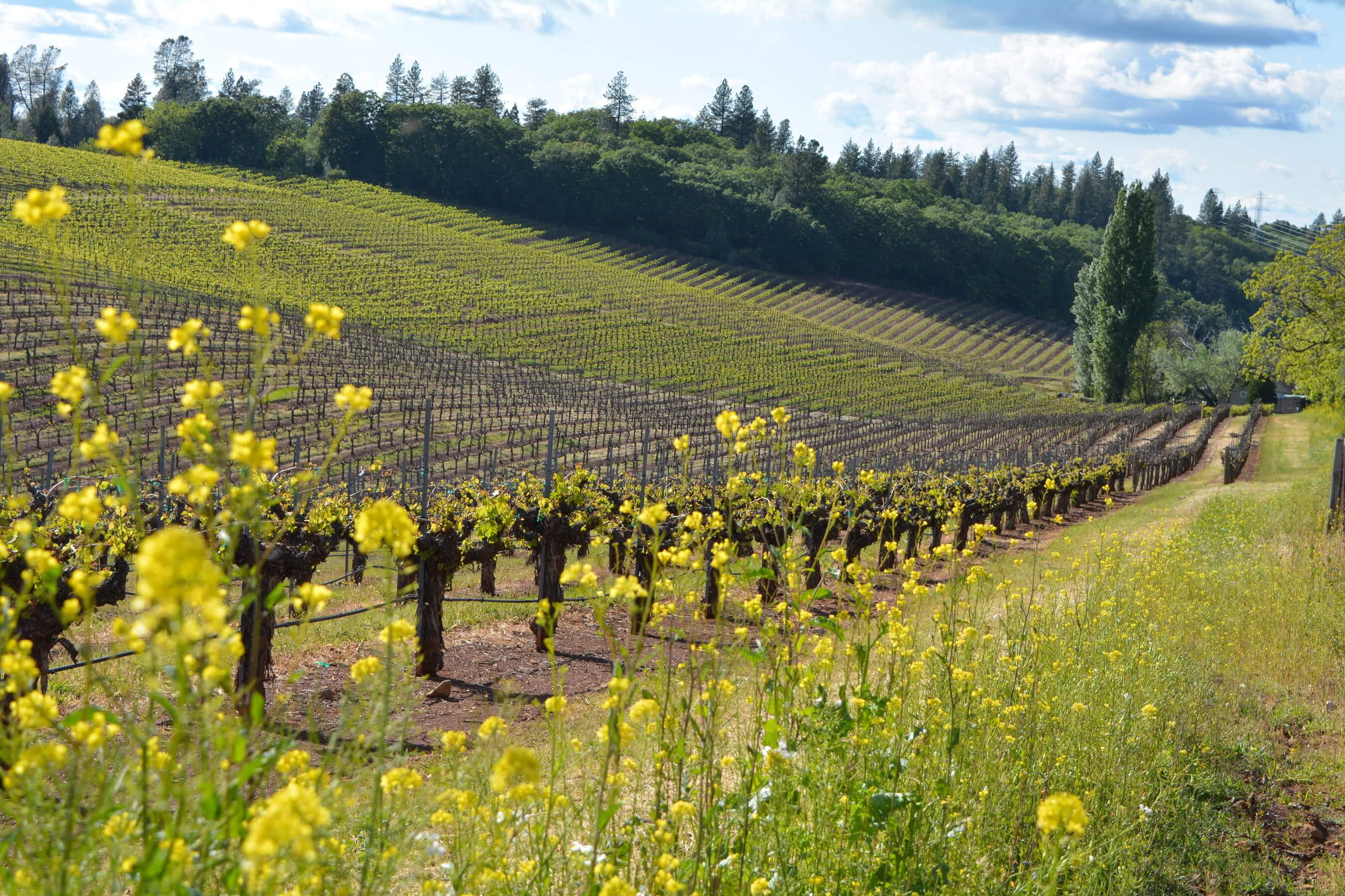Sierra Foothills: Wine roads of California