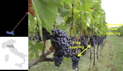 , Italy: Wines of Emilia-Romagna, Buzz travel | eTurboNews |Travel News