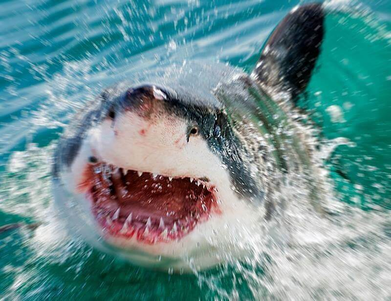 Hawaii ranks #2 in America for shark attacks over past two