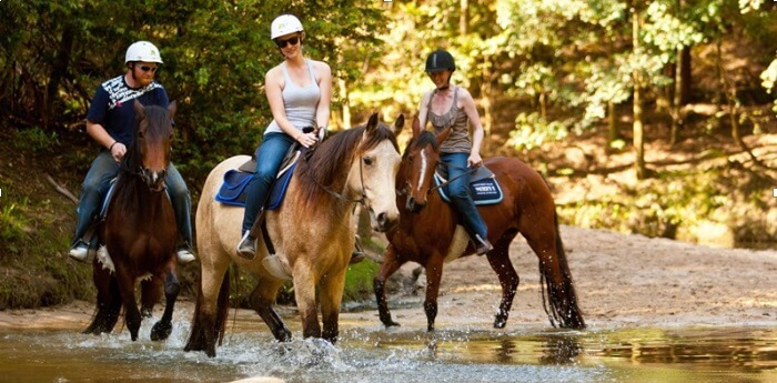 Ride Zimbabwe introduces horse riding game viewing
