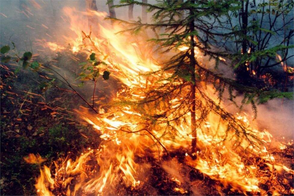 Russia's largest private airline to plant 1,000,000 trees in wildfire devastated Siberia