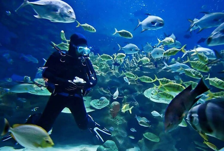 Egypt's tourism authorities ban fish feeding during diving tours