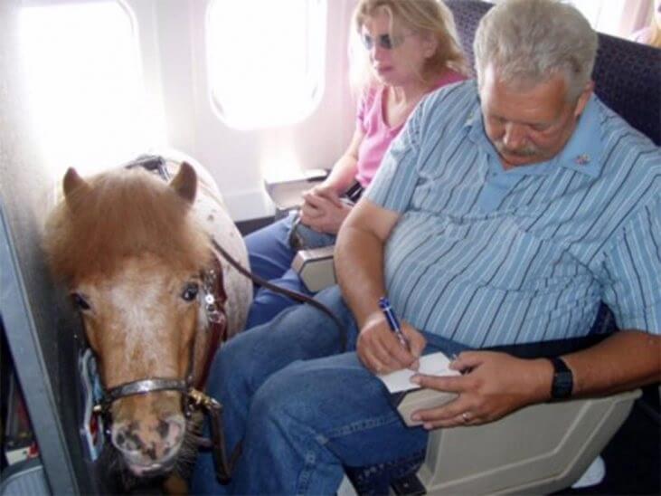 Consumer attitudes towards service animals during travel revealed