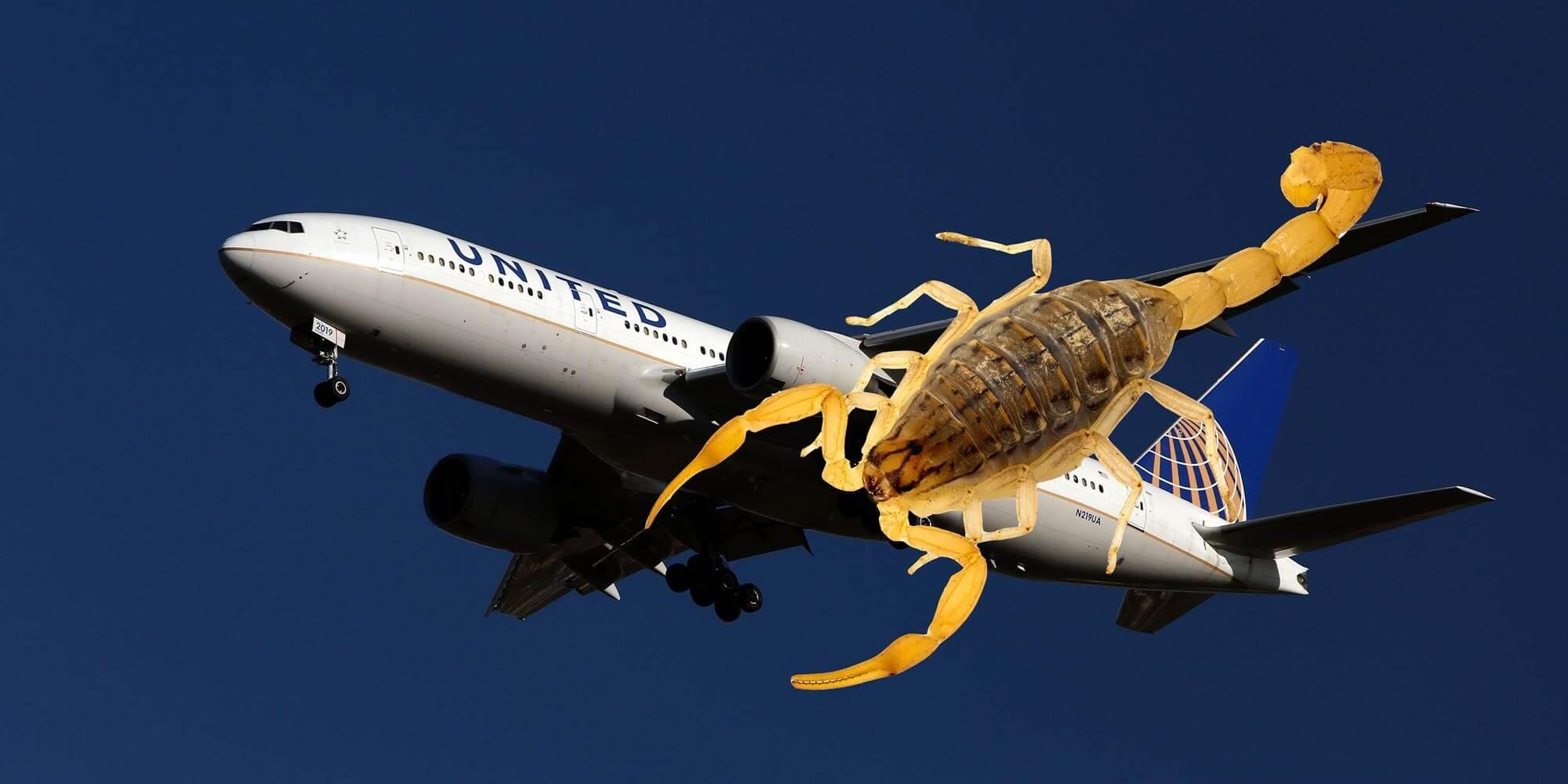 Scorpion attacks United Airlines passenger on San Francisco-Atlanta flight