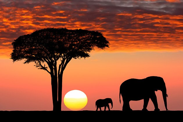 5 Things to Consider Before Going on an African Safari Trip
