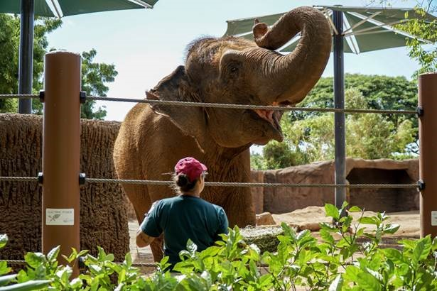 Honolulu Zoo achieves esteemed AZA accreditation