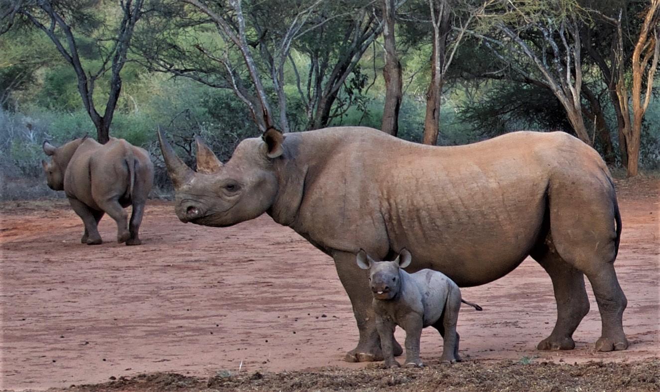 Mkomazi Wildlife Park turns into rhino tourism sanctuary