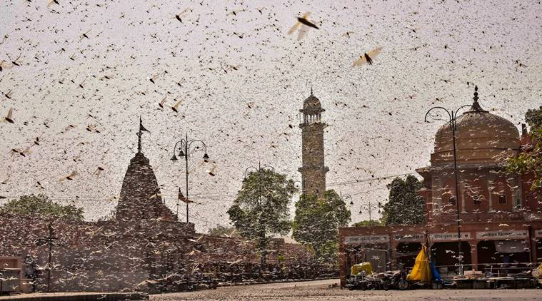 New Delhi braces for locust attack