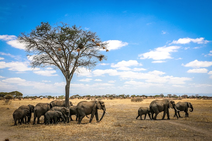 African Wildlife Foundation Champions Biological Diversity Conservation