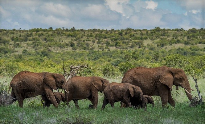 African States Battling COVID-19 with Low Wildlife Conservation Budgets