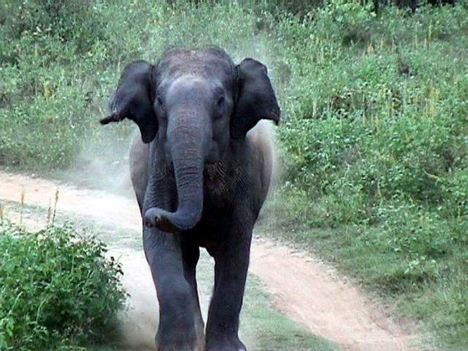 Dreaming of a Travel Safari? How to Calm an Agitated Elephant